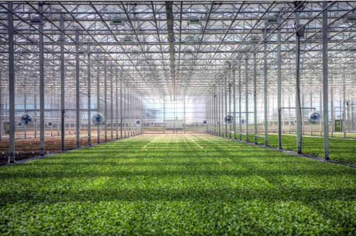 Growing More With Less: The Past, Present and Future of Greenhouses 2