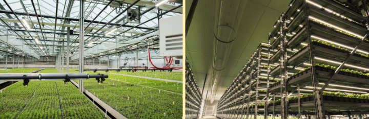 Growing More With Less: The Past, Present and Future of Greenhouses 3