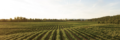 The Importance of Sustainable Agriculture