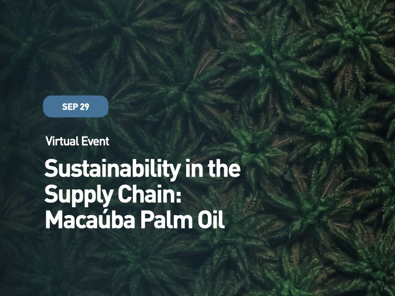 Sustainability in the Supply Chain: Macaúba Palm Oil