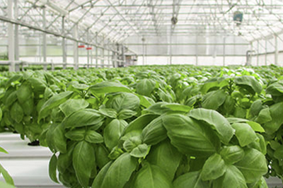 Growing More With Less: The Past, Present and Future of Greenhouses (Part 2)