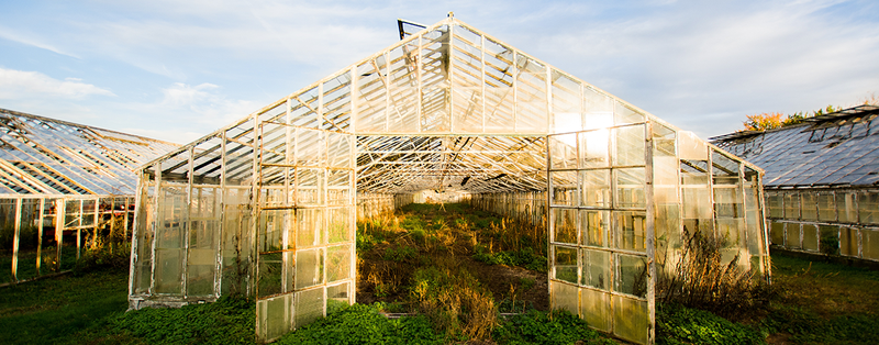 Growing More With Less: The Past, Present and Future of Greenhouses (Part 2) 1