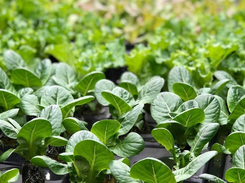Indoor Vertical Farming: The New Era of Agriculture