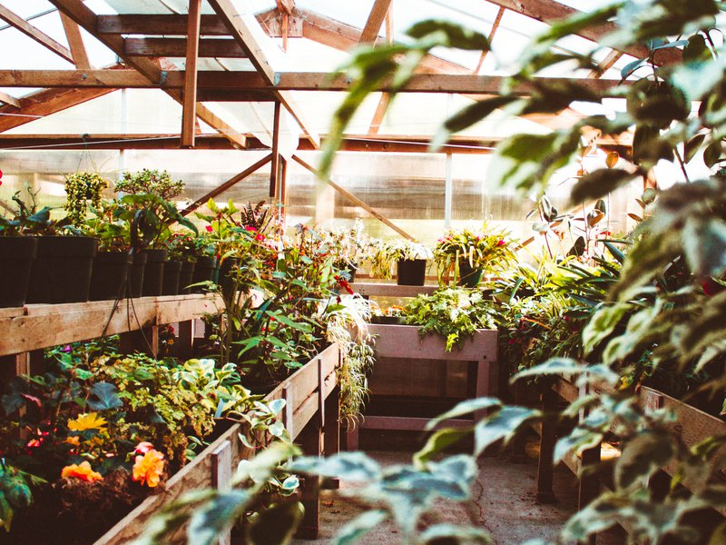 Growing More With Less: The Past, Present and Future of Greenhouses Part 2