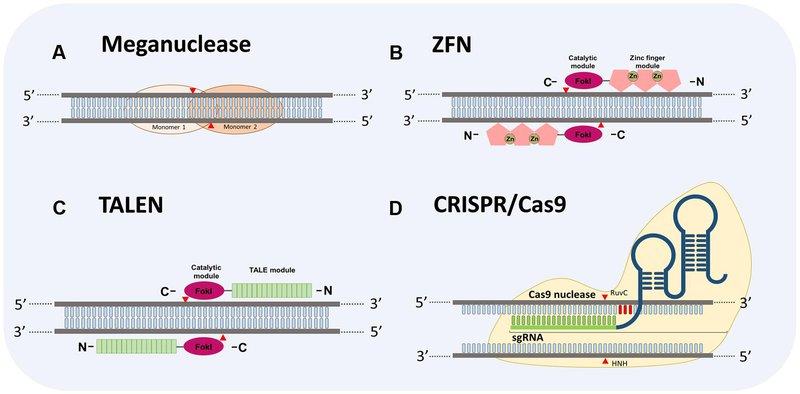 site-specific gene editing