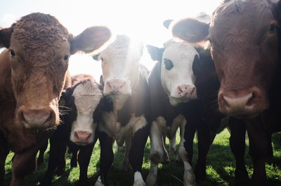 Livestock Farming Technology in Animal Agriculture