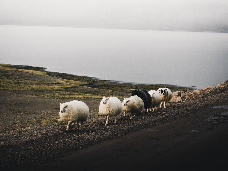 9 Companies Revolutionizing Livestock Management