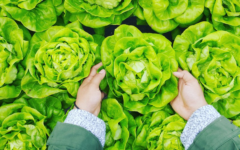 5 Vertical Farming Companies on the Rise