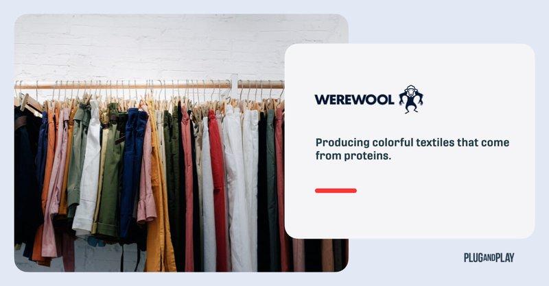 sustainable-dyeing-startups-werewool.001.jpeg